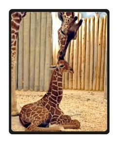 Cool Cute Giraffe Fleece Blankets Throws 40 x 50 inches